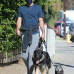 Zachary Quinto in a Blue Tee Walks His Dog in Los Feliz 11/13/2020